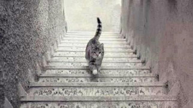 la-imagen-que-divide-a-twitter-el-gato-sube-o-baja-las-escaleras