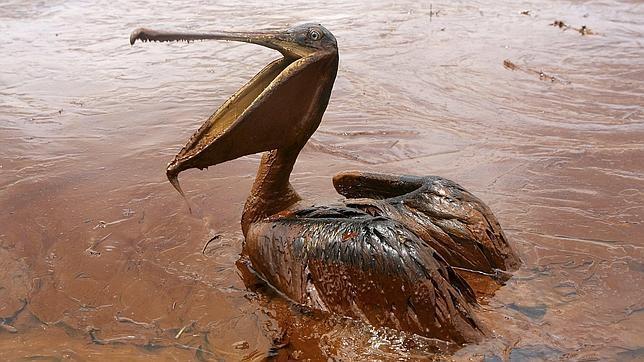 Los dispersantes usados en el vertido del golfo de México dañaron más que el petróleo