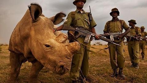 Un grupo de rangers protege a «Sudán»