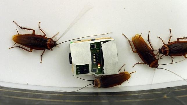 LAs cucarachas se convierten en