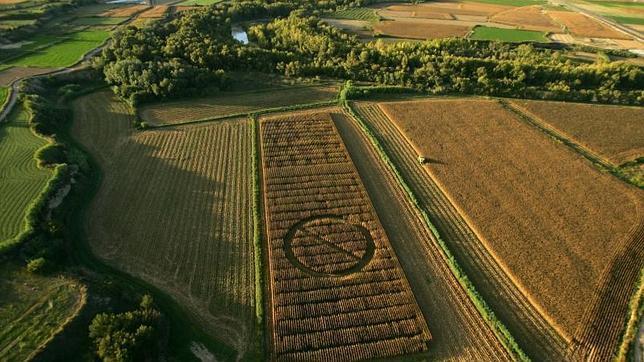 Campo de maíz experimental de Zuera (Zaragoza) marcado con un gigantesco símbolo de «prohibido» por activistas de Greenpeace
