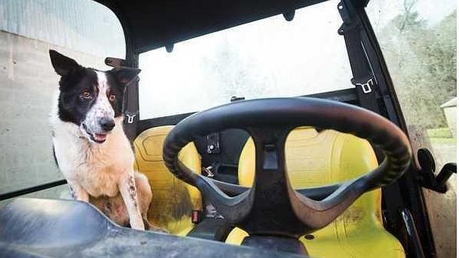 El perro que desató el caos conduciendo un tractor por la autopista