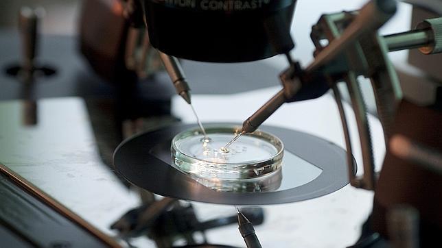 Un experimento muestra los riesgos de manipular el genoma humano