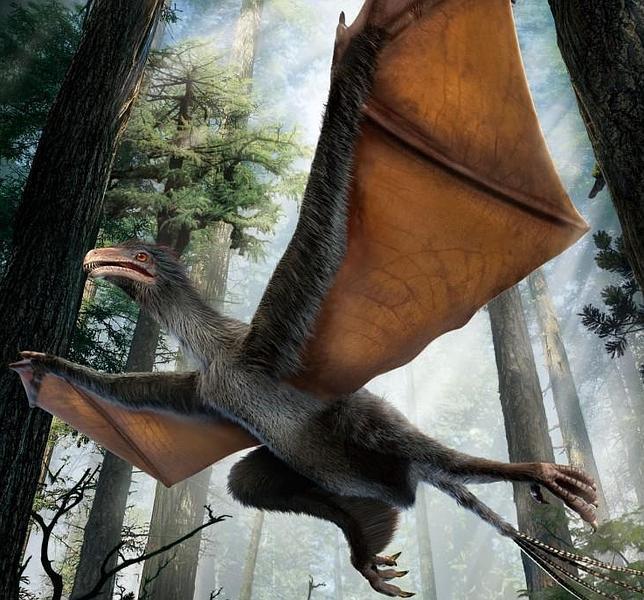 No se sabe si este pequeño dinosaurio podía volar como un murciélago o sólo planear como las ardillas voladoras
