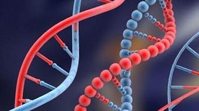 Un sexto componente del ADN presente en bacterias podría estar en humanos