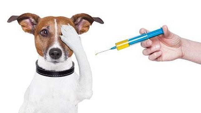 El veterinario les dirá cuándo y cómo se deben administrar las vacunas
