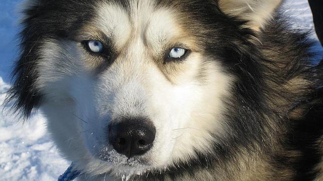 El Perro El Mejor Amigo Del Hombre Desde Hace 40000 Años