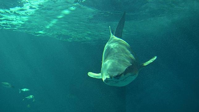 Ecuador: más de 30.000 tiburones sacrificados para usar sus aletas