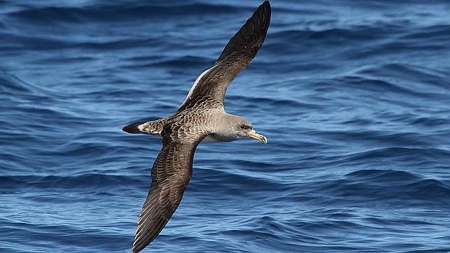 El CSIC pretende reducir la mortaldiad de estas aves