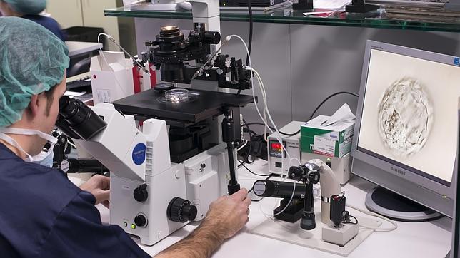 Hasta ahora nadie había logrado cultivar artificialmente en un laboratorio una extremidad completa, algo que se acaba de lograr en una rata