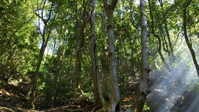La laurisilva, uno de los valores a preservar en Anaga, en Santa Cruz de Tenerife