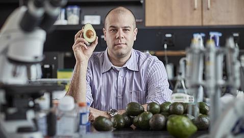 Un derivado del aguacate destruye las células madre de la leucemia