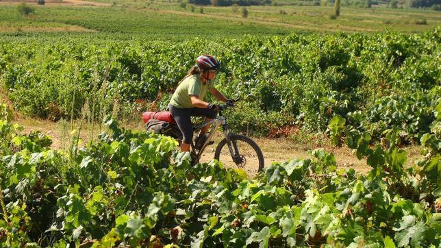 El Camino de Santiago a su paso por las viñas del Bierzo