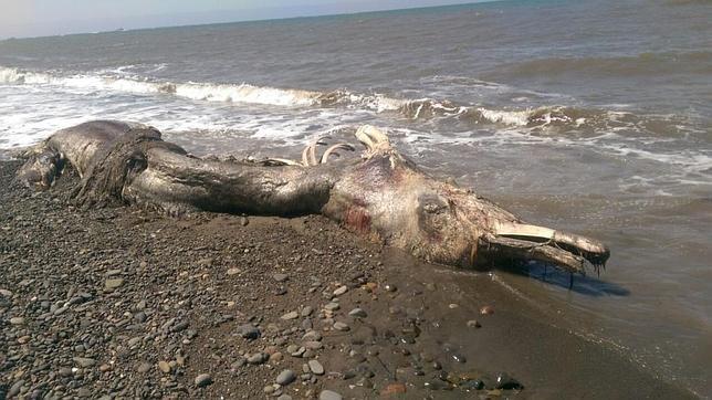 Hallan muerta a una misteriosa criatura marina en la isla de Sajalín