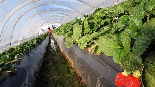 Los drones pueden ayudar a mejorar los sistemas de control del climay la monitorización de los cultivos