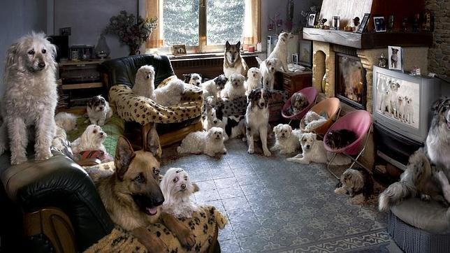 El número de alojamientos que admiten animales de compañía va en aumento