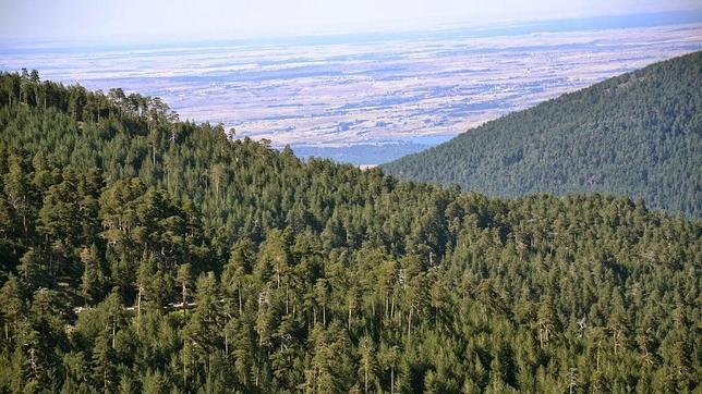 Vista de los Montes de Valsaín (Segovia)