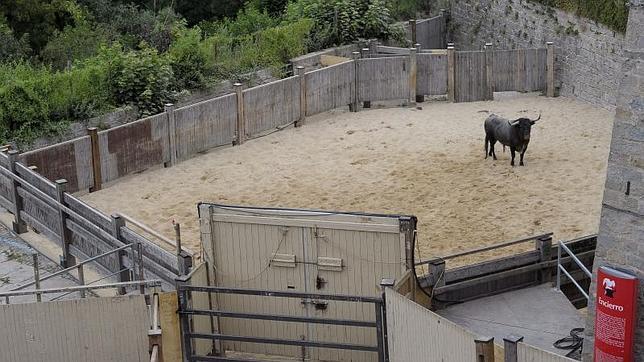 La querencia de un toro moviliza a más de cien personas