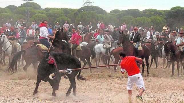 El toro de la Vega, alanceado a pie en 2014