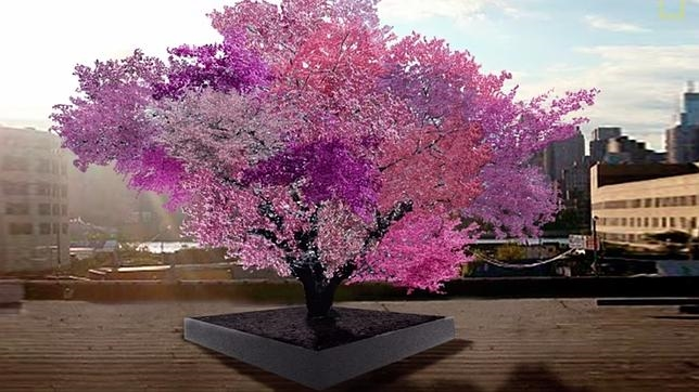 El «Árbol de las 40 frutas» es el producto de una antigüa técnica de injerto consistente en unir en un mismo árbol ramas de diferentes tipos de frutales