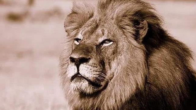 Imagen de «Cecil»