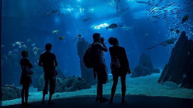 Los 25 mejores acuarios del mundo