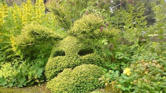 arbusto joder
