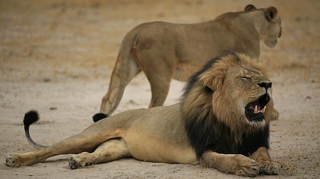 Los famosos toman las redes para protestar por la muerte de Cecil
