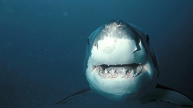 Un bañista manifestó haber observado un tiburón en aguas próximas a la playa