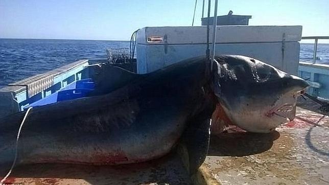 Imagen del tiburón muerto subida a Facebook