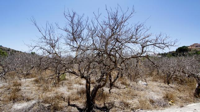 El precio del agua desalada en origen es nueve veces m s for Que significa dibujar arboles secos