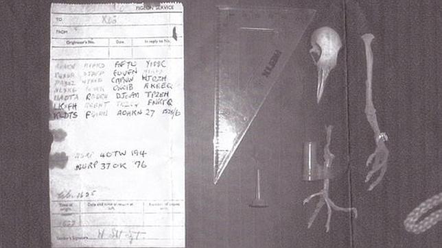 Se encontró junto al cadáver de una paloma olvidada al fondo de una chimenea en la casa de un particular