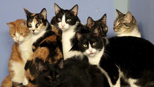¿Por qué motivo los gatos son más independientes que los perros?