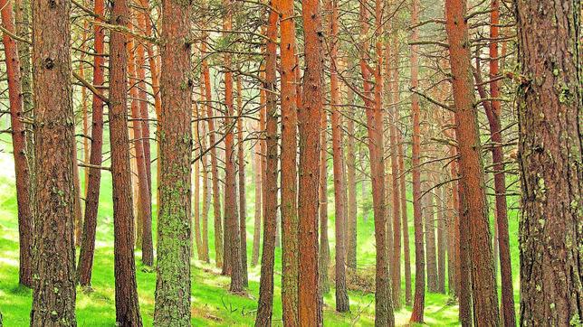 En 2015 los bosques cubren cerca de 3.999 millones de hectáreas de las zonas terrestres del planeta