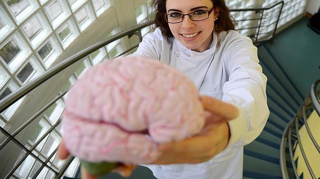 Muestra del banco de cerebros