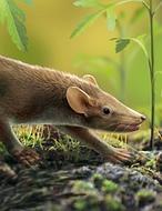 El mamífero español que convivió con los dinosaurios