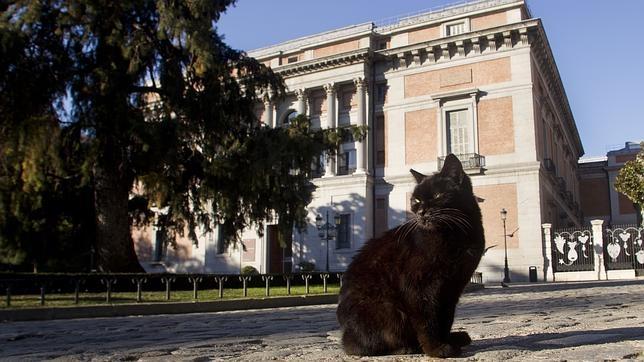 Gatos que «contagian» la esquizofrenia
