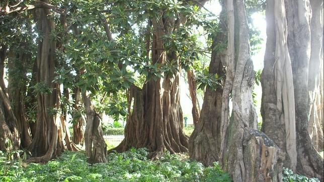 Los cinco parques m s bonitos de valencia for Jardin de ayora