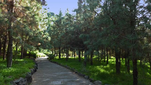 Cinco parques de canarias en los que dejar a un lado el estr s for El jardin canario