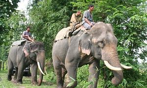 http://www.abc.es/Media/especiales/canal-natural/elefante-sumatra--300x180.jpg