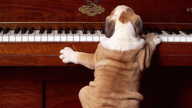 Se buscan perros.... para concierto