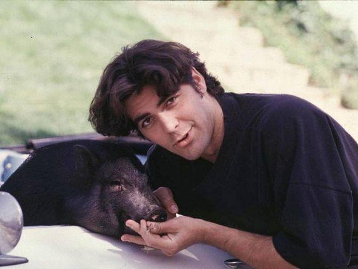 George Clooney tuvo un cerdo como mascota durante muchos años
