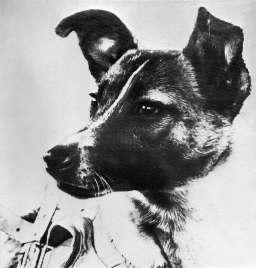 Imagen de Laika publicada en el diario Pravda el 13 de noviembre de 1957