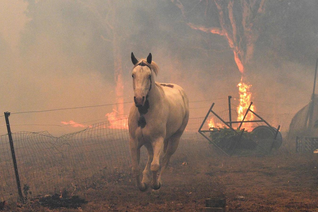 Resultado de imagen para incendios forestales australia