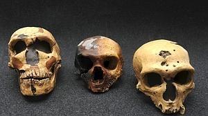 Los «Homo sapiens»llegaron a Europa hace 40.000 años desde África