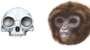 Laia, el «primate» catalán