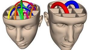 Diez mitos sobre el cerebro masculino y femenino