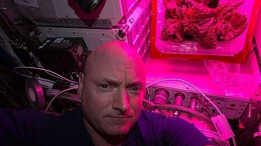 El astronauta Kelly, con la segunda cosecha de lechuga en agosto de 2015
