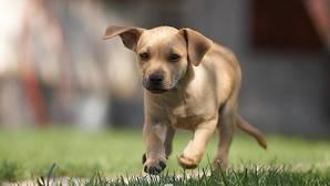 Los perros pueden reconocer las emociones humanas y de otros canes