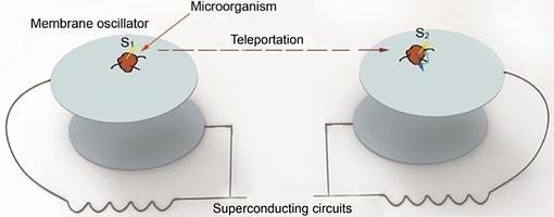 Este es el esquema propuesto por Tongcan Li y Zhang-qi Yin para teletransportar un organismo